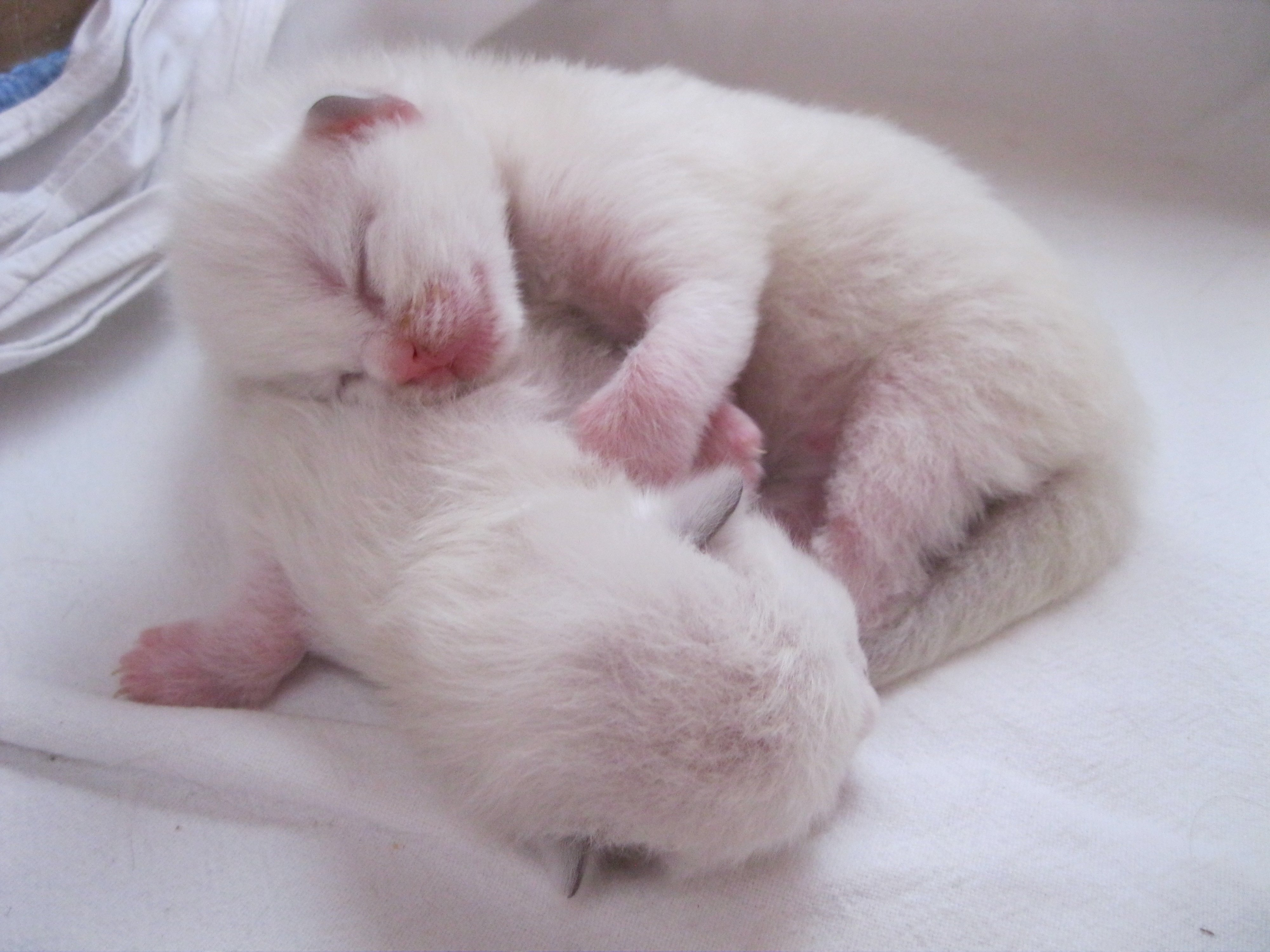 6 days old