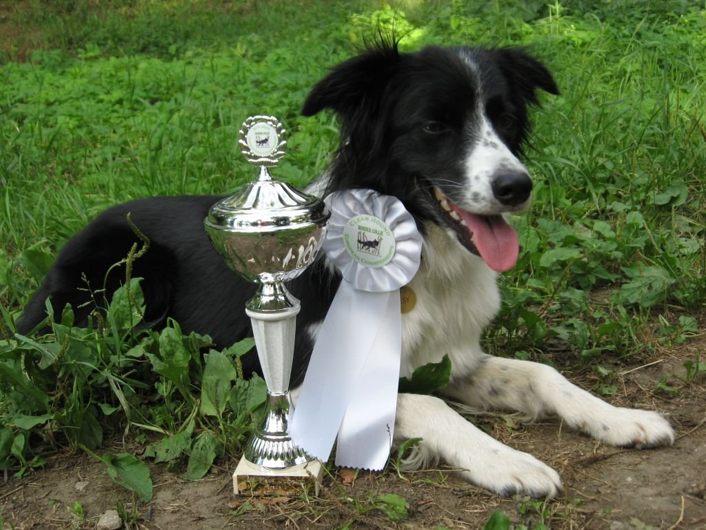 Border Collie Classic - 2nd place