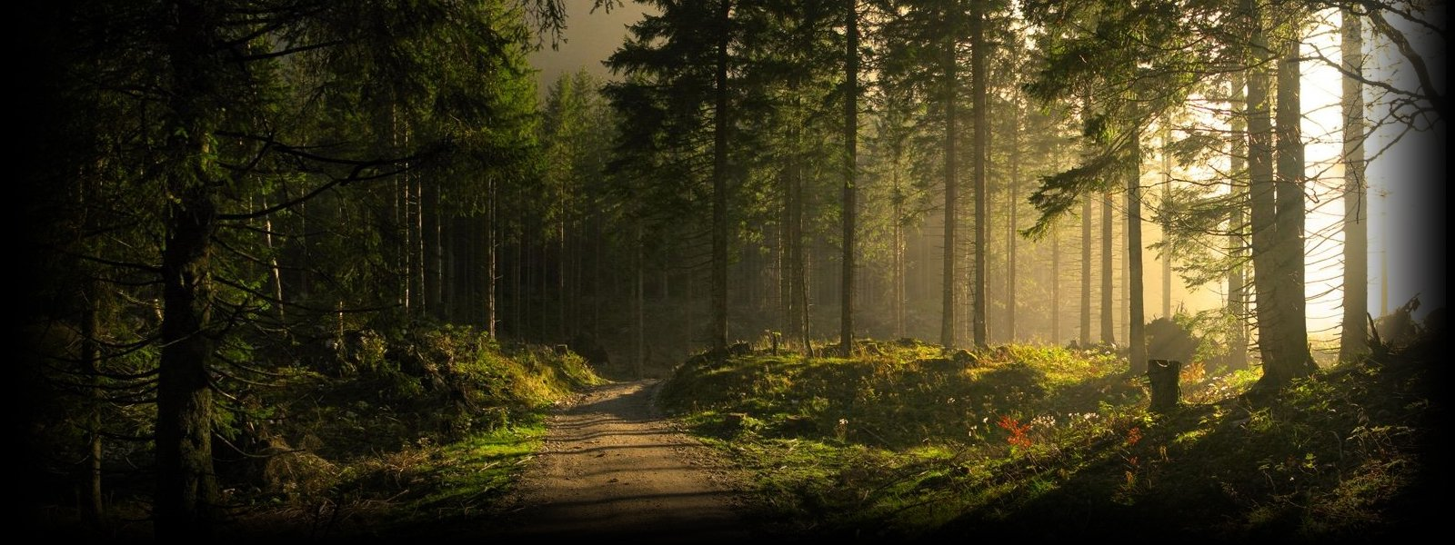 doublewide_forest_road.jpg